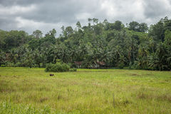 The small village on the edge of the Jungle in the vicinity of B Stock Photography