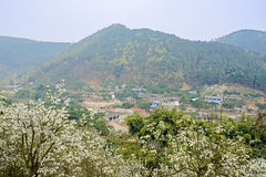 Small village at foot of mountain ablaze with pear blossom in su Royalty Free Stock Image