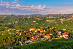 Small village among green vineyards. Stock Images