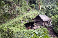 Small village house in a jungle Royalty Free Stock Images