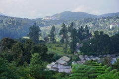 Small village with mountain bachground in Cameron Highlands, Malaysia.  Royalty Free Stock Image