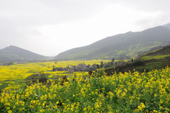 Small village in rape field Royalty Free Stock Photography