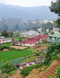 Small village with vegetable fields in Kandy, Sri Lanka Stock Image