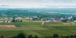 Small village between vineyards. View over vineyards, small village and forest in summer Royalty Free Stock Image