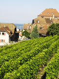 Small vineyard. Small green vineyard in france. In bakcground building with red roofs Royalty Free Stock Photo