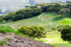 A small vineyard lies tucked away in the hills of California. A small vineyard in the early spring before the grape vines begin to grow, lies tucked away in the Stock Photo