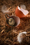 Small vintage clock in broken egg Royalty Free Stock Photography