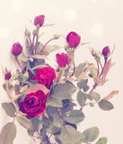 Small vintage roses Stock Images