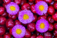 Small violet blooms lying on cherries. Small violet blooms are lying on cherries Stock Photography