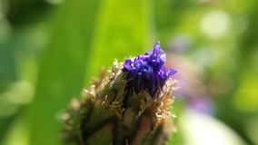 Small violet closed summer flower. Macro photo stock photography