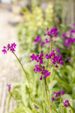 Small Violet Orchid Royalty Free Stock Images