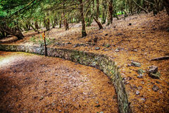 Small wall in Burgos forest Royalty Free Stock Images
