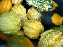 Gourds Background Stock Images