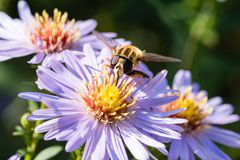 The small wasp sitting on a flower Stock Image