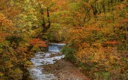 Small water fall with beautiful autumn season. Small water fall with beautiful autumn season at Akita, Japan royalty free stock image