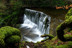 A  small water fall in the forest Stock Images