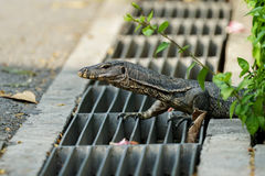 Small water monitor on sewer lines Royalty Free Stock Photography
