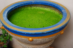 Small water plant in bowl Royalty Free Stock Photos