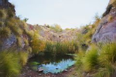 Small water pond in the Sonoran desert. In Arizona, USA with green grass growing near the water Stock Photos