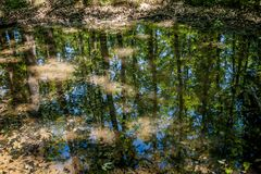 Small water puddle in the forest whit reflection the trees Royalty Free Stock Photo