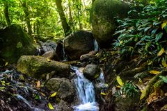 Small water stream in lively forest. Waterfalls in forest research institute Malaysia with lively artificial and research forestry stock photo