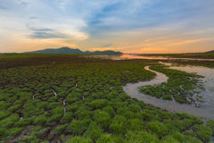 Small water way with little grass over crack land, natural landscape and sunset sky background Stock Photography