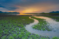 Small water way over green grass cracked land Stock Image