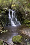 A small waterfal deep in the forest. Stock Photography