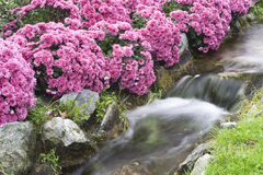 Small waterfall. Small waterfull in a garden Royalty Free Stock Photos
