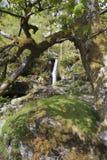 A small waterfall on Afon disgynfa Stock Image