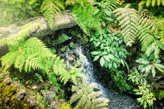 Small waterfall in autumn forest Stock Photography