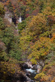 Small waterfall and autumn tree forest Royalty Free Stock Photo