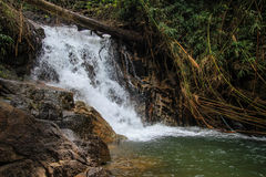 Small waterfall. A bamboo forest with small waterfall in tropic zone of Thailand Royalty Free Stock Images