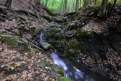 Small waterfall on the Borzesti stream going up to Borzesti Gorge. Royalty Free Stock Images