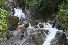 Free Small Waterfall Cascade In Rocky Stream As It Rushes Through The Forest Stock Photo - 111526020