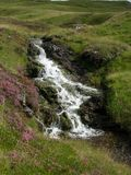 Small waterfall at a creek accompanied by purple heather running down green Hills at Glenshee Valley, Grampian Mountains, Scotland stock image
