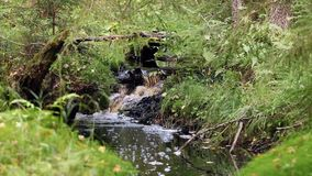 Small waterfall on a creek in  forest stock video footage