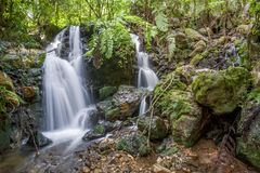 Small waterfall in the dark forest. Waterfalls and vegetation inside the Bwindi Impenetrable Forest Stock Photos