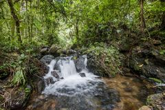 Small waterfall in the dark forest. Waterfalls and vegetation inside the Bwindi Impenetrable Forest Royalty Free Stock Images