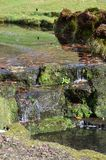Small waterfall in the English countryside. Scenic waterfall and stream in the rural County of West Sussex in Southern England Royalty Free Stock Images