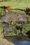 Small waterfall in the English countryside. Scenic waterfall and stream in the rural County of West Sussex in Southern England Royalty Free Stock Photos