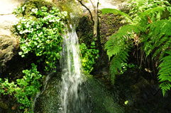 Small waterfall and fern plant Royalty Free Stock Images