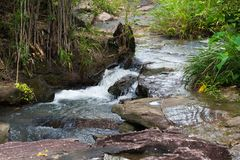 Small waterfall that flows through on a piece of stone in the natural forest. Stock Images