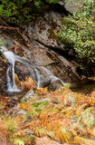 Small waterfall in the forest Stock Images