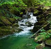 Small waterfall in the forest Stock Photography
