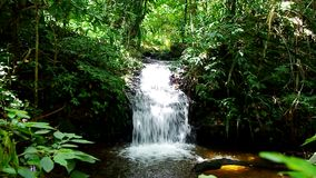 Small waterfall in forest. Small waterfall flowing in the dense tropical rain forest stock video