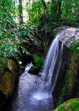 Small waterfall in the forest. Royalty Free Stock Image