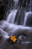 Small waterfall in the forest, late autumn. Late autumn. Small waterfall in the forest. Maple leaf of the last forces held on to the stone Royalty Free Stock Photo