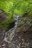 Small waterfall in the forest Stock Image