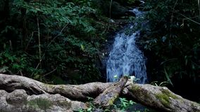 Small waterfall in forest stock video